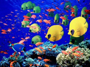beautiful_coral_reef_fish_wallpaper_3_nature