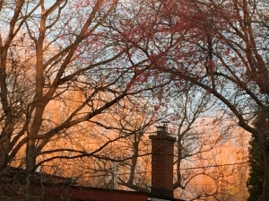 A fiery November morning sky over my neighbourhood.