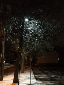 Ice-covered tree in Pointe-Claire Village, December 28th, 2015