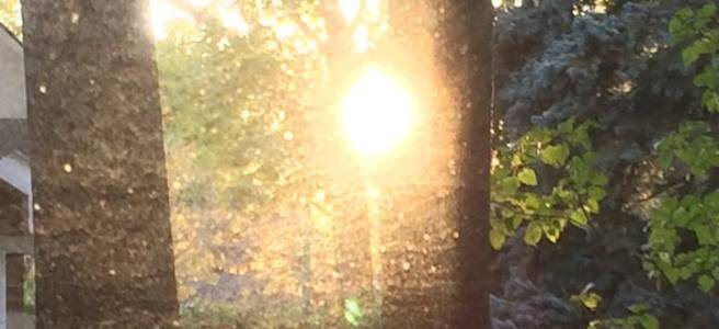 November 17th, the sun through my kitchen window
